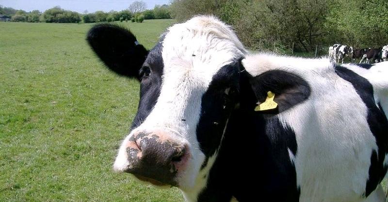 Gelo çêlek bikêrtire an Encûmena Nûneran? - Hogir Şerîf